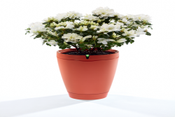 Parrot Pot - Self Watering Plant Pot Red